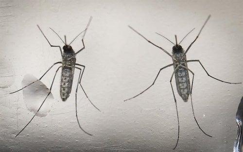 Quello che le donne incinte devono sapere sul virus Zika