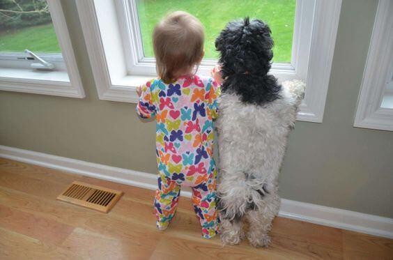 Bimbo e cane guardano fuori dalla finestra.