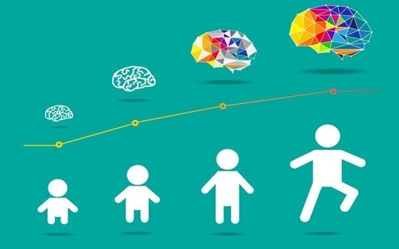 Lo sviluppo cerebrale ha inizio con la nascita e prosegue nell'età adulta