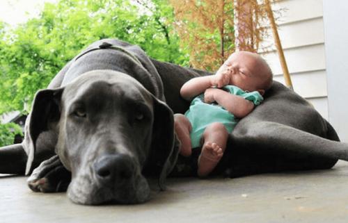 Dobbiamo preparare il nostro animale domestico per l'arrivo del bebè?