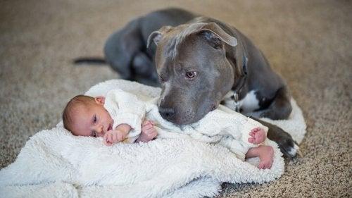 Noenati e cani possono convivere