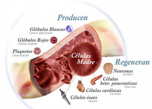 foto della struttura delle cellule staminali