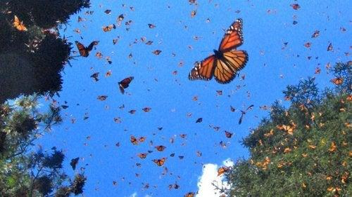 Farfalle nel cielo