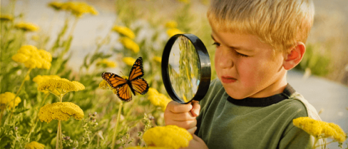 Bambino guarda una farfalla