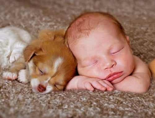 Neonati e cani in casa: come preparare l'ambiente?