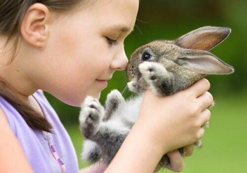 bambina strofina il naso su quello di un coniglio grigio