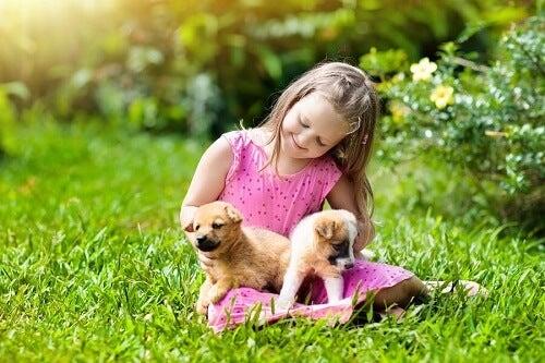 bimba seduta su prato con due cuccioli di cane in grembo