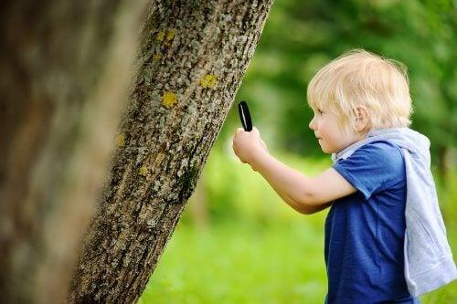 Bimbo studia albero