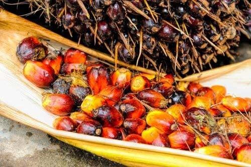 Chicchi dell'olio di palma