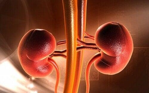 Tumore ai reni nell'infanzia: sintomi e cause