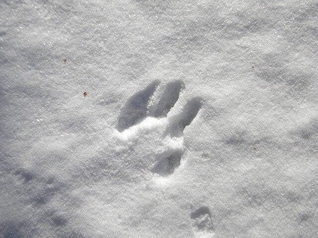 Impronte sulla neve