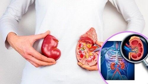 Medico spiega il tumore ai reni nell'infanzia