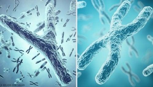 Cromosomi Y e X