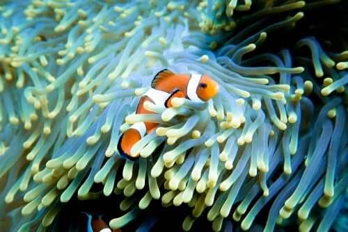 Pesciolino che sembra Nemo