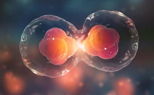 Genetica per bambini: cos'è il ciclo cellulare?