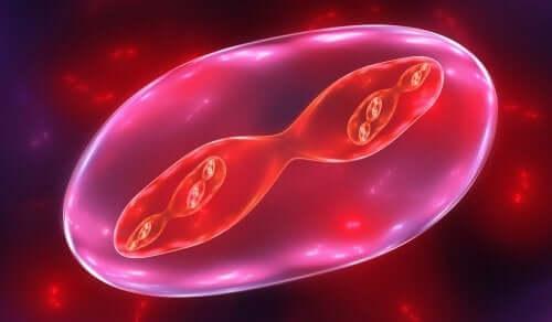 Fasi della meiosi: come spigarle ai bambini
