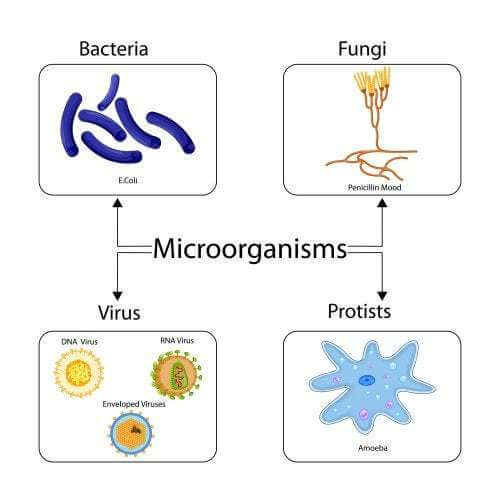 Gli antibiotici sono efficaci contro i virus?