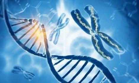 Molecole e cromosomi