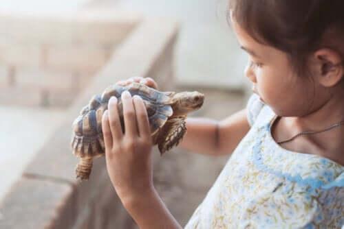 Effetti della tecnica della tartaruga, bambina e tartaruga.
