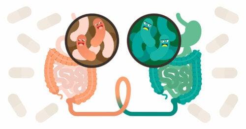 Che cos'è il trapianto fecale e quando è consigliato?